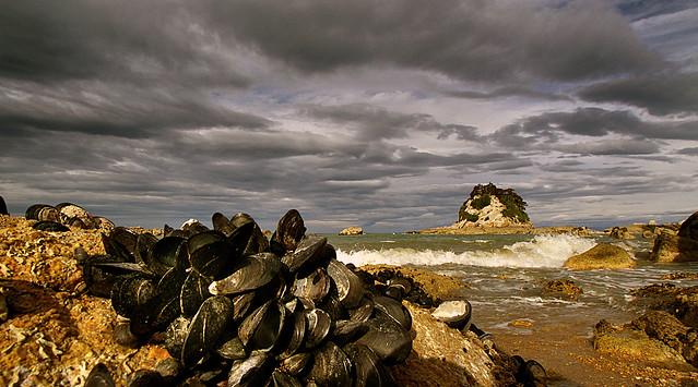 Mussel clustered rocks Kaiteriteri.NZ)
