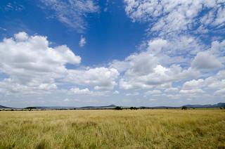 Tanzania-Serengeti-8   by QuakeUp!