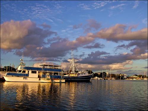 florida spongedocks tarponsprings lateafternoon shrimpboats nikoncoolpix8700 ancloteriver corelpaintshoppro dodecanesestreet