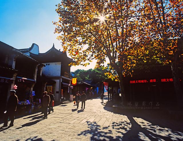 Maple Leaves  无锡惠山红叶