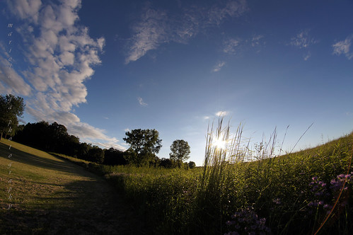 park trees light shadow summer sky sun sunlight nature grass clouds memories meadow fisheye sunflare thegalaxy vigilantphotographersunite vpu2