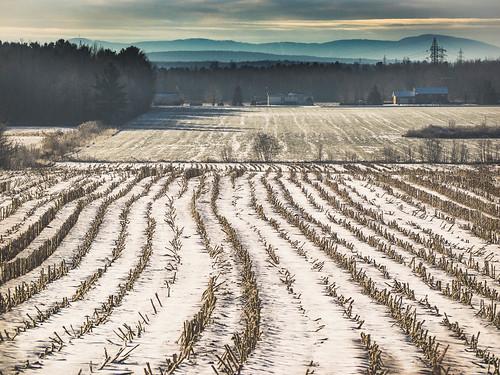 Winter landscape | by Lise1011
