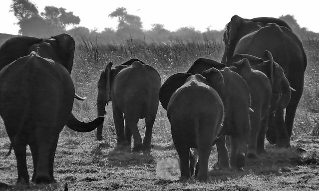 Botswana - Chobe NP