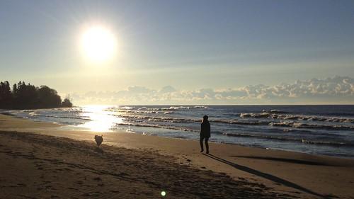 dog beach softcoatedwheatenterrier scwt