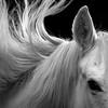 horse_A.P (15)
