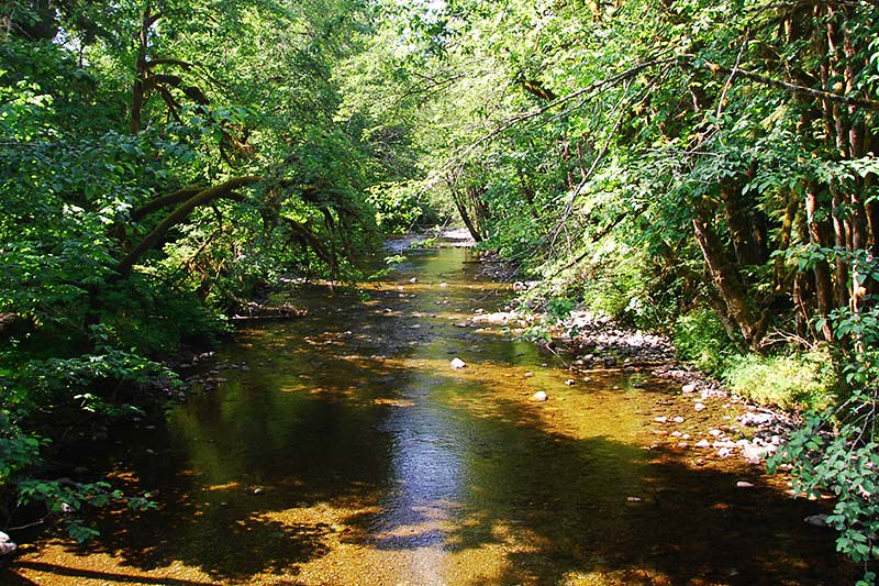 Shaw Creek flows into Cowichan Lake near Lake Cowichan, Vancouver Island, British Columbia