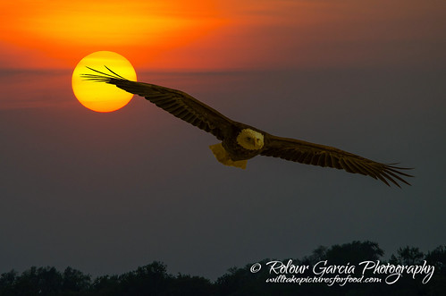 sunset composite eagle bald crystallake mainbeach 2image