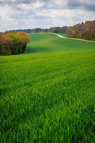 champ ligne de fuite leading line landscape paysage field