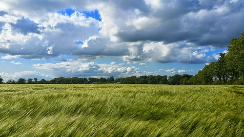 ireland light summer sky color colour green art nature beautiful beauty field sunshine clouds contrast landscape golden landscapes photo amazing focus exposure mood view heart natural bright image farming grain dream grow picture growth land fields vastness pleasent natgeo