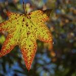 Leaf explosion....