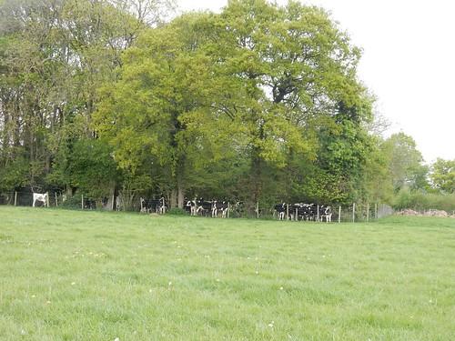 """A """"cow den"""" near Cowden Hever to Ashurst"""