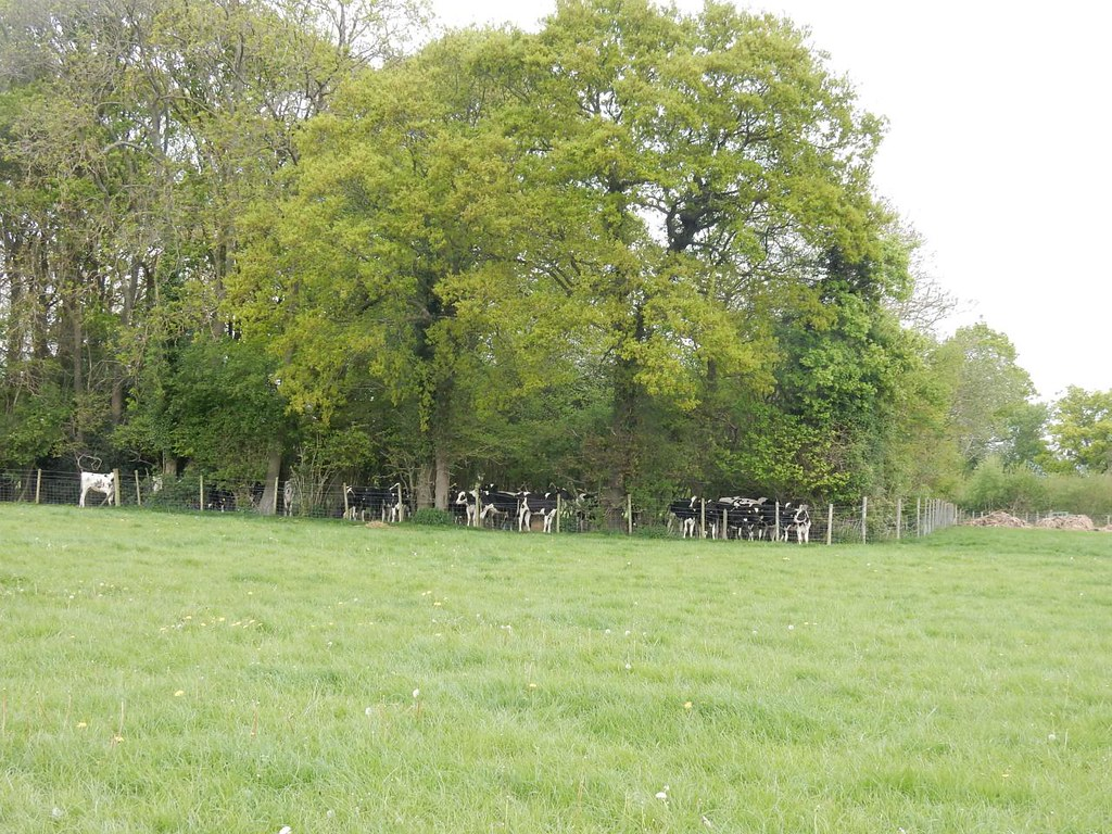 "A ""cow den"" near Cowden Hever to Ashurst"