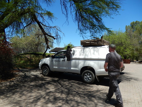 Waterberg - baviaan op de auto