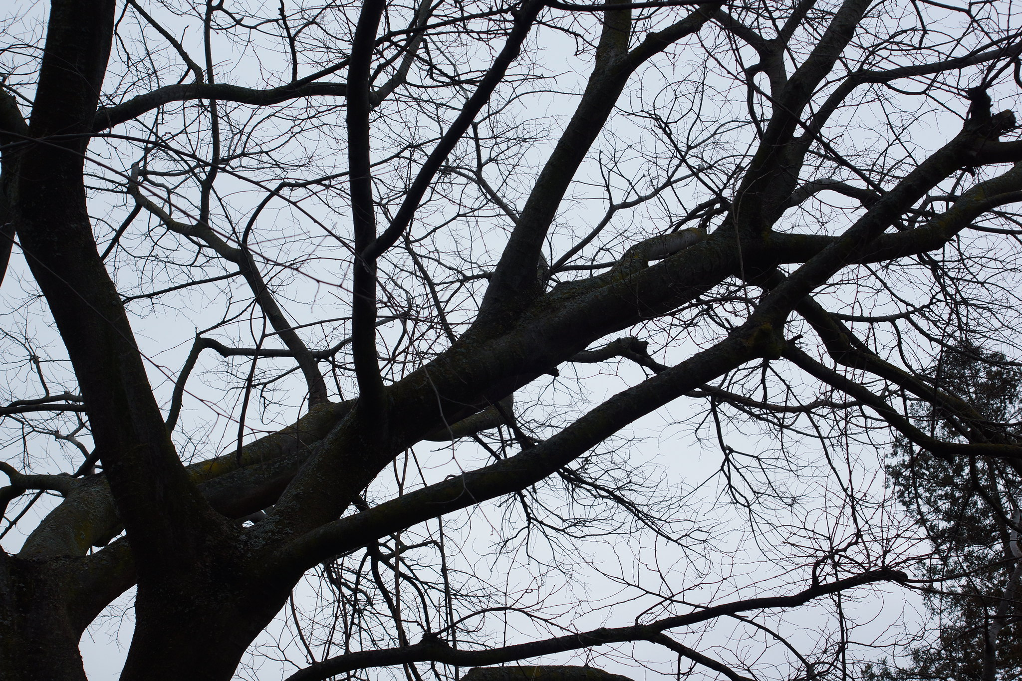2017-02-15 Twigs Test - Take 4 [#1]