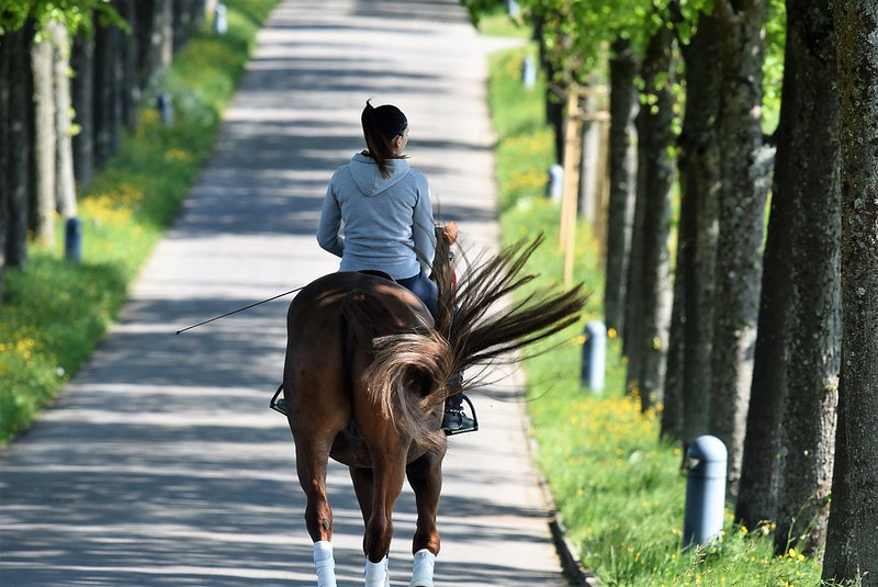 Horse 23.04 (7)
