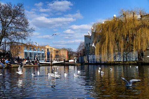 road bridge reflection bird water river lock ripple gull locks hampstead camdem arimm