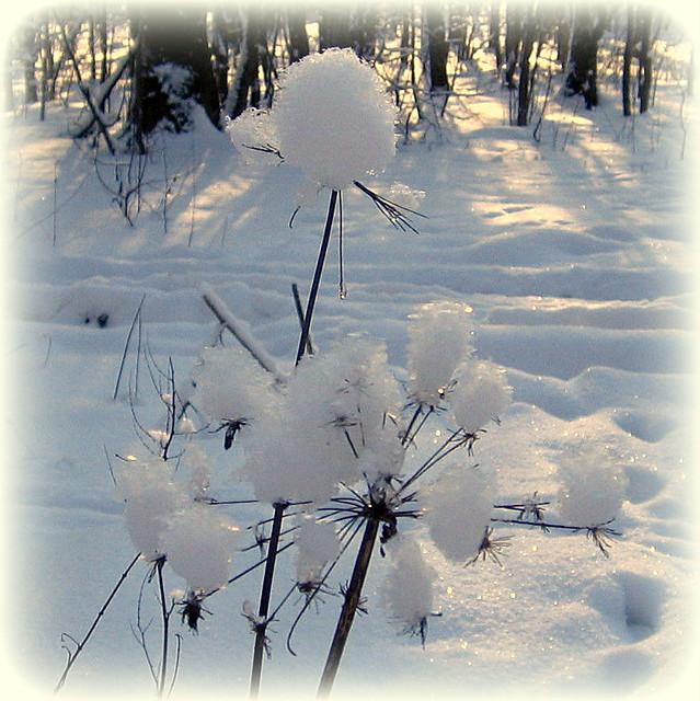 Пушистый снег.  Fluffy snow.