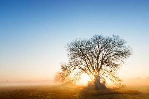 california ca blue sun tree yellow sunrise bayarea pleasanton