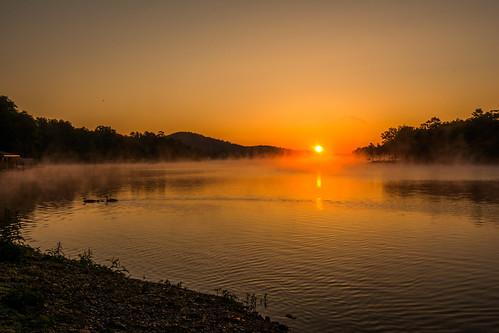 fog geese lake landscape sunrise hotspringsvillage arkansas