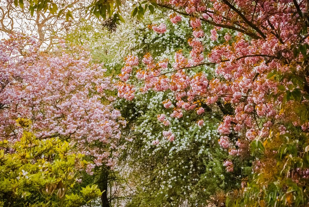 flowers  DSC_4167