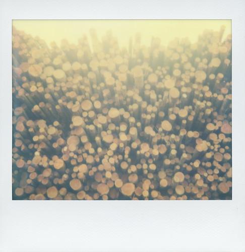 polaroid polaroidspectrafirstedition spectra impossibleproject productiondate201506 lumber eureka california schmidbauerlumber impossiblespectracolorfilm polaroidweek roidweek2017 lumbermill humboldtcounty logs