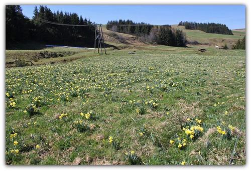 Autour du Mézenc en avril-mai 34337167755_140feba120