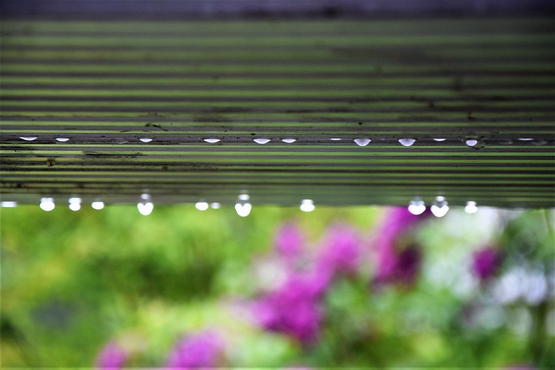 Raindrops 01.05 (1)