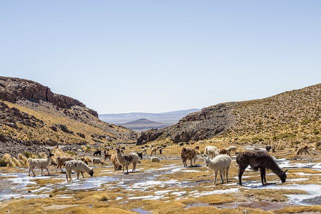 CG1X-IMG_2719-PR Canon Powershot G1X Altiplano Bolivia