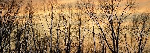 treesdiestandingup