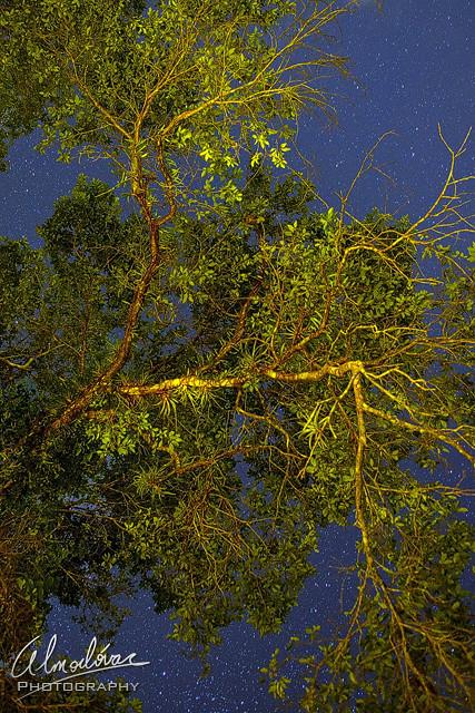 Bajo las ramas de un árbol.