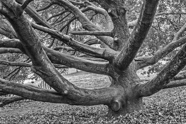 London - Hyde Park