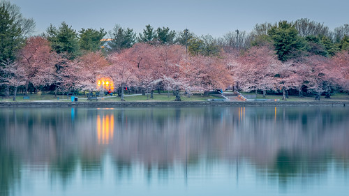 cherry blossom 2017 cherryblossom2017 canon nature naturebeauty greatnature explore nationalgeographic park farm dazzlingshot wildlife beauty usa 7dmkii dc blinkagain ultimateshot supershot washington washingtondc washdc wash tidalbasin