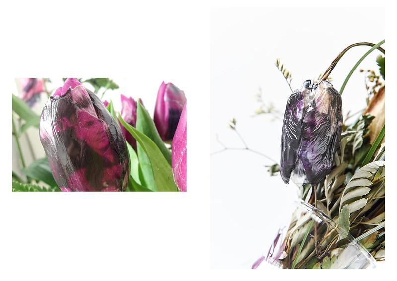 Katalog květy tisk9