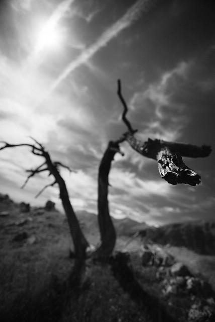 Atterissage sur une branche