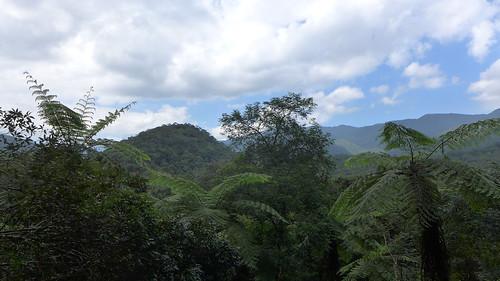 Tue, 10/21/2014 - 12:49 - ForestGEO Fushan Forest Dynamics Plot, Taiwan. Photo credit: I Fang Sun