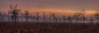 Dew in the morning, NPSphoto, G.Gardner | by evergladesnps