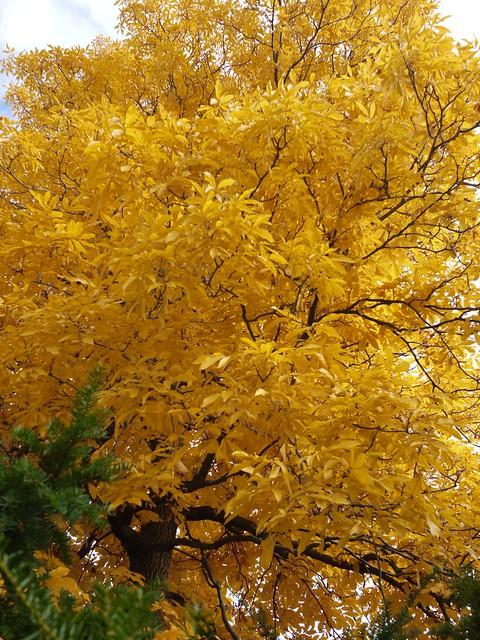 日, 2013-11-03 13:34 - Bronx Botanical Gardenの紅葉