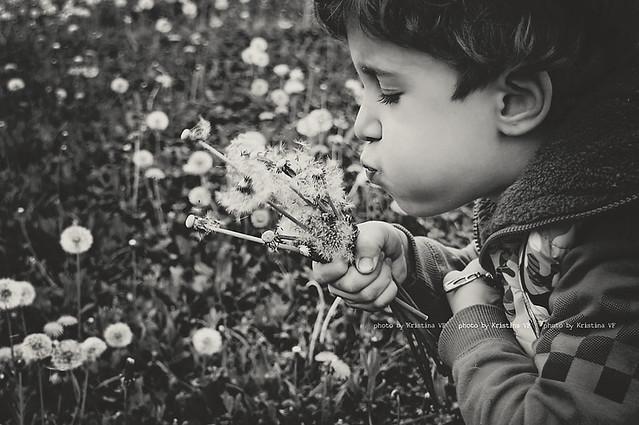 My Dandelion Boy