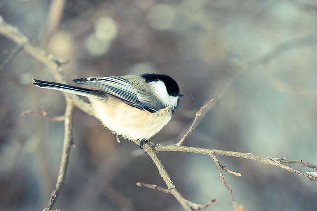 Bird on Stick #1238974325