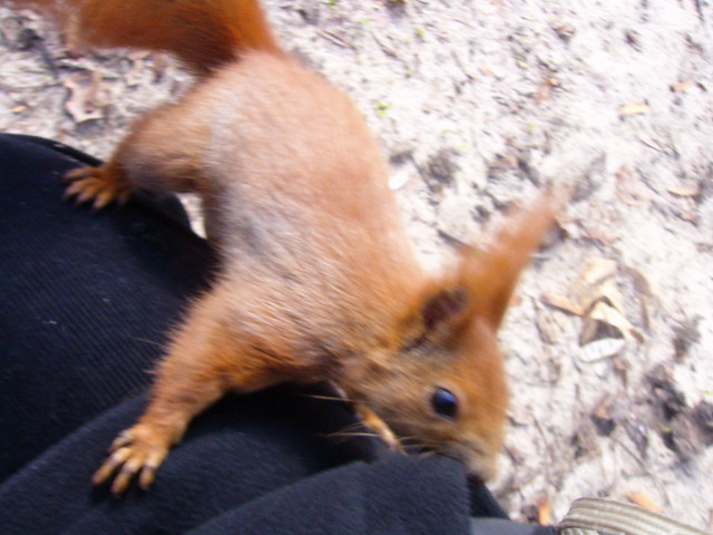 Warsaw - angry squirrel :-)