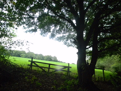Fence with sloping field Hever to Ashurst