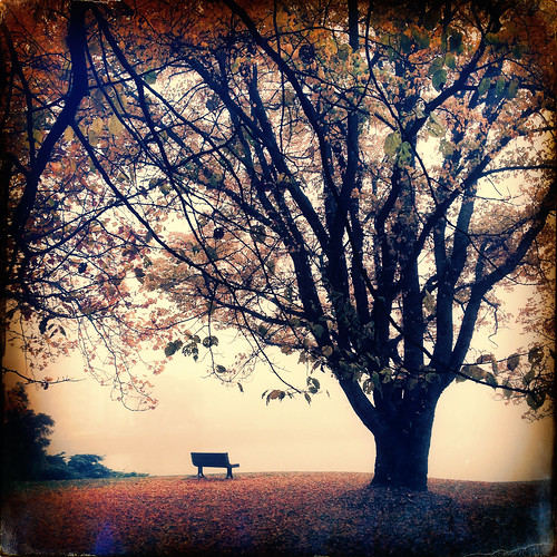 autumn tree fall fog bench october oakbay makebeautiful sussexfilm tejaslens hipstography