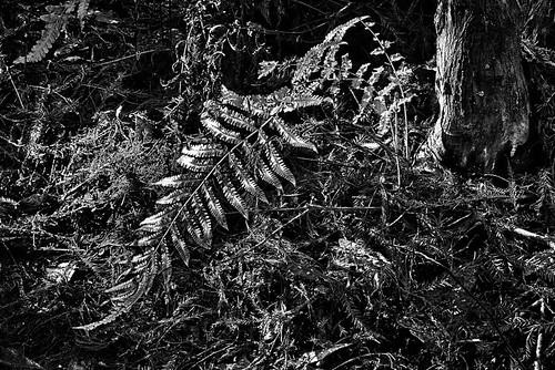 fern wilderness hdr cypressswamp cypresshammock highlandscountyflorida ericseibert flordastatepark