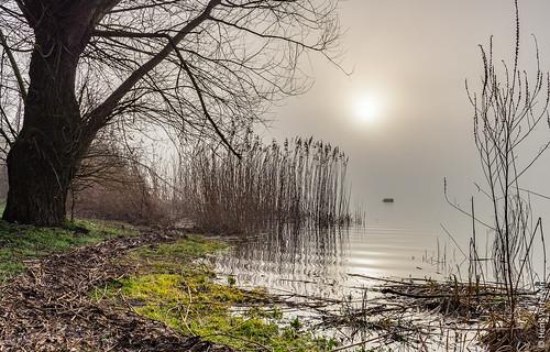 beers kraaijenbergseplassen mist nl nederland netherlands boom fineart fog reed riet sun sunrise tree water zon zonsopkomst linden noordbrabant reflection reflexie landscape landschap filter lee