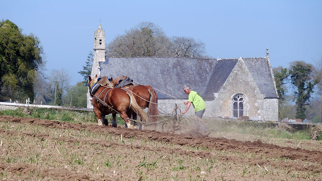 Cheval Breton au labour