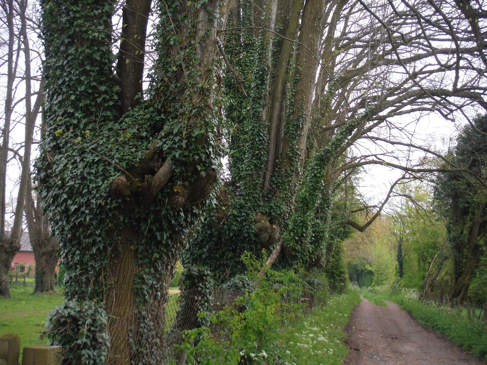 Approach to West Winterslow SWC Walk 265 - Dean to Mottisfont and Dunbridge (Alternative Start from Salisbury)