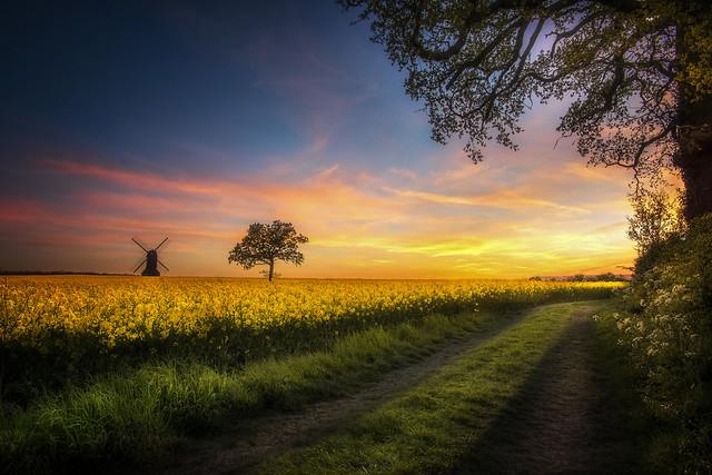Sunset Delight (final edit)