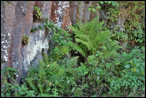 Anciennes coulées basaltiques  34321128776_0ddc34b63f