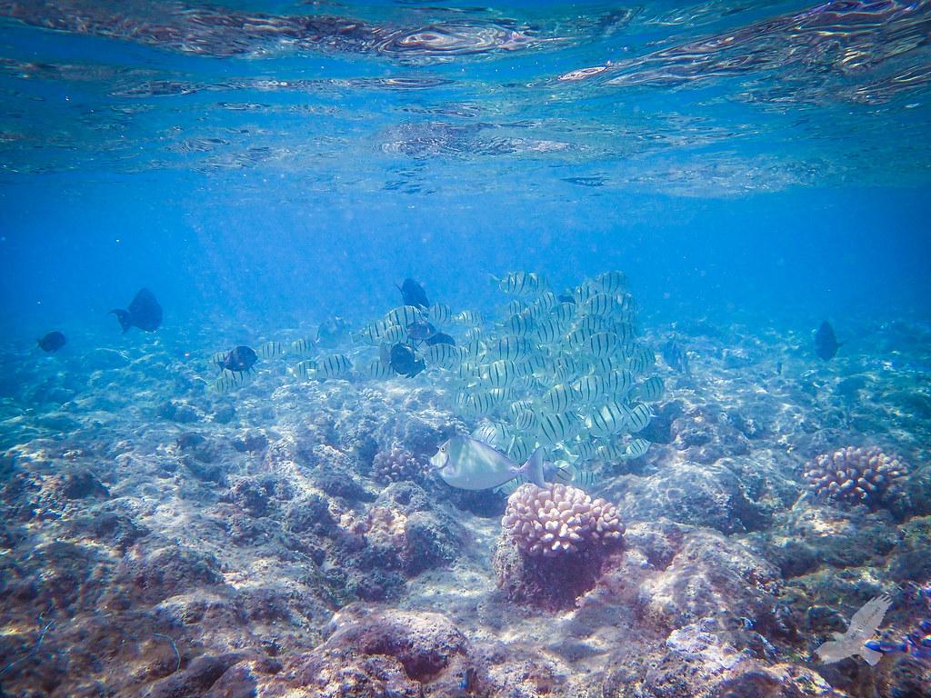 Kauai Forest Under The Sea | Love the fishies! | Christian ...