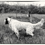 CEROX - In primo piano e Rivi con un cucciolone in consenso